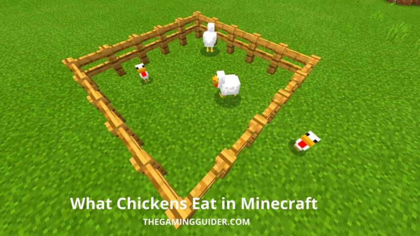 What Chickens Eat in Minecraft- the gaming guider